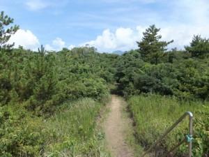 七里御浜の防波堤から雑木林の散策路へ下る階段