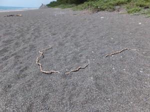 七里御浜、途切れた防波堤の中央付近、足を引っ掛けた木の根