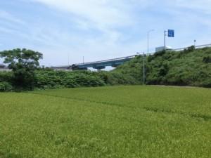 阿田和橋の先にあるJA御浜経済センター付近から望む国道42号