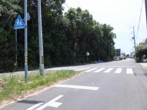 熊野古道、気付かずにウミガメ公園を過ぎた先のY字路
