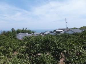 「熊野古道 新宮まで 6km」の道標付近からの風景
