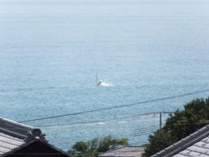 「熊野古道 新宮まで 6km」の道標付近から望む漁船