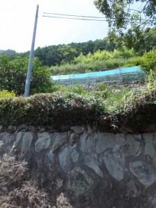狼煙場跡(紀宝町井田字大石)の説明板付近の段々畑