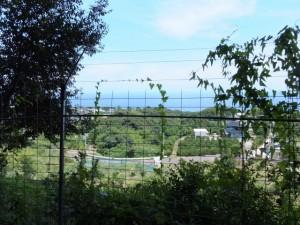 井田一里塚跡の前からの風景