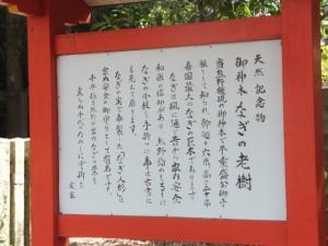 国指定天然記念物 梛の大樹の説明板(熊野速玉大社)