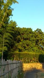 宇治山田神社の社叢