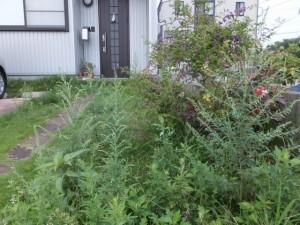 庭の草刈り、ビフォー