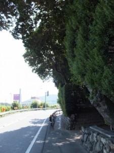 国道167号と赤崎神社