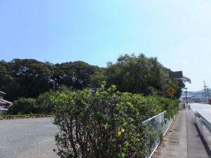 国道167号、田城城跡付近