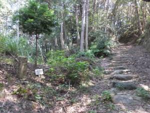 松尾道(青峯山登山口〜正福寺)、三丁目付近