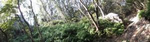 松尾道(青峯山登山口〜正福寺)、ますきち岩(左)