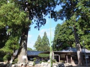 青峯山正福寺の夫婦杉