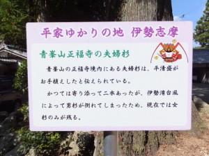 「青峯山正福寺の夫婦杉」の説明板
