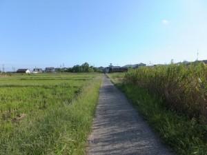 伊雑宮 御神田付近の農道から国道167号へ