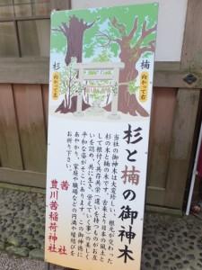 茜社(伊勢市豊川町)、「杉と楠の御神木」案内板