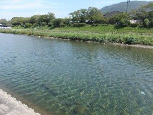 新橋と浦田橋の中間付近(五十鈴川)