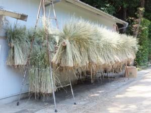 稲刈り後の御神田(猿田彦神社)