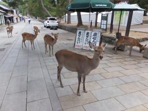 鹿が向かえてくれる東大寺への参道