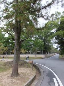 転害門への丁字路(東大寺)