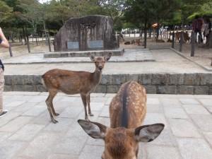 「世界遺産 古都奈良の文化財 東大寺」の石碑と鹿・。
