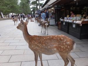 東大寺の参道、鹿とみやげもの屋