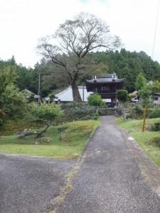 正念寺(伊勢本街道)
