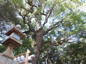 遷座祭を終えた境内 八幡神社(鳥羽市船津町)