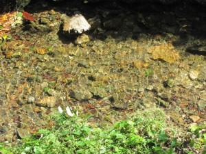 白滝大明神の休憩所 どんぐり小屋前の水路(鳥羽市)