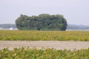 農道から望む朽羅神社の社叢