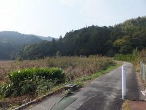 江神社の社叢を望む