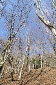 大峠の登山口〜高見山山頂