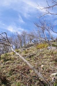 山頂付近(大峠の登山口〜高見山山頂)