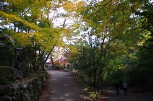 紅葉の天開山 泰運寺(飯高町波瀬)