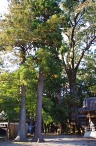 水屋神社(松阪市飯高町赤桶)