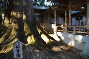 二号楠と仮殿(水屋神社)
