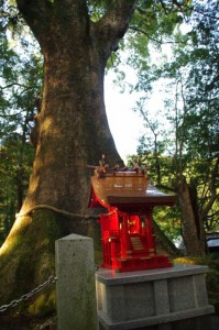 水屋の大楠 天然記念物(水屋神社)