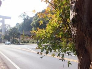 紅葉が始まった御幸道路