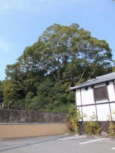 国道23号から望む葭原神社の社叢