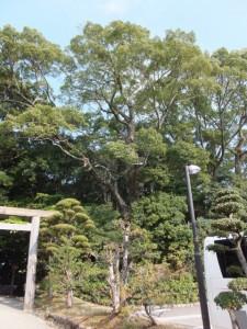 月讀宮の参道から望む葭原神社の社叢