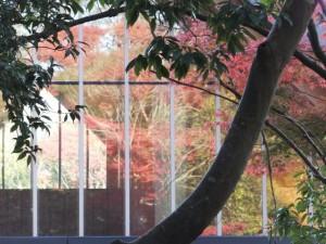 せんぐう館の窓ガラスに映る紅葉(外宮)