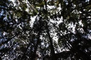 三瀬川登り口〜三瀬坂峠(熊野古道)