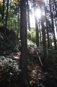 三瀬坂峠(熊野古道)
