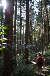 三瀬坂峠〜里登り口(熊野古道)
