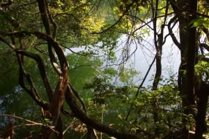 里登り口近くにある三瀬坂池(熊野古道)