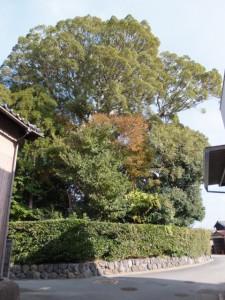 宇須乃野神社の社叢を望む