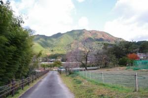 三瀬砦跡付近から望む行者山方向(大台町下三瀬)