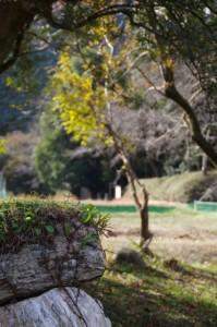 熊野古道伊勢路から望む三瀬砦跡(大台町下三瀬)