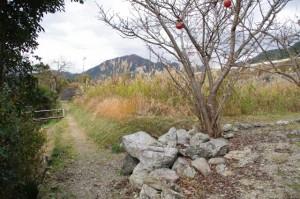 道標(↓慶運寺・北畠具教三瀬砦跡、→三瀬の渡し)の左手の道