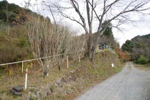 観音堂跡の石垣(下三瀬八柱神社近く)