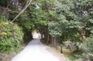 茶臼山の登り口付近から東池へ